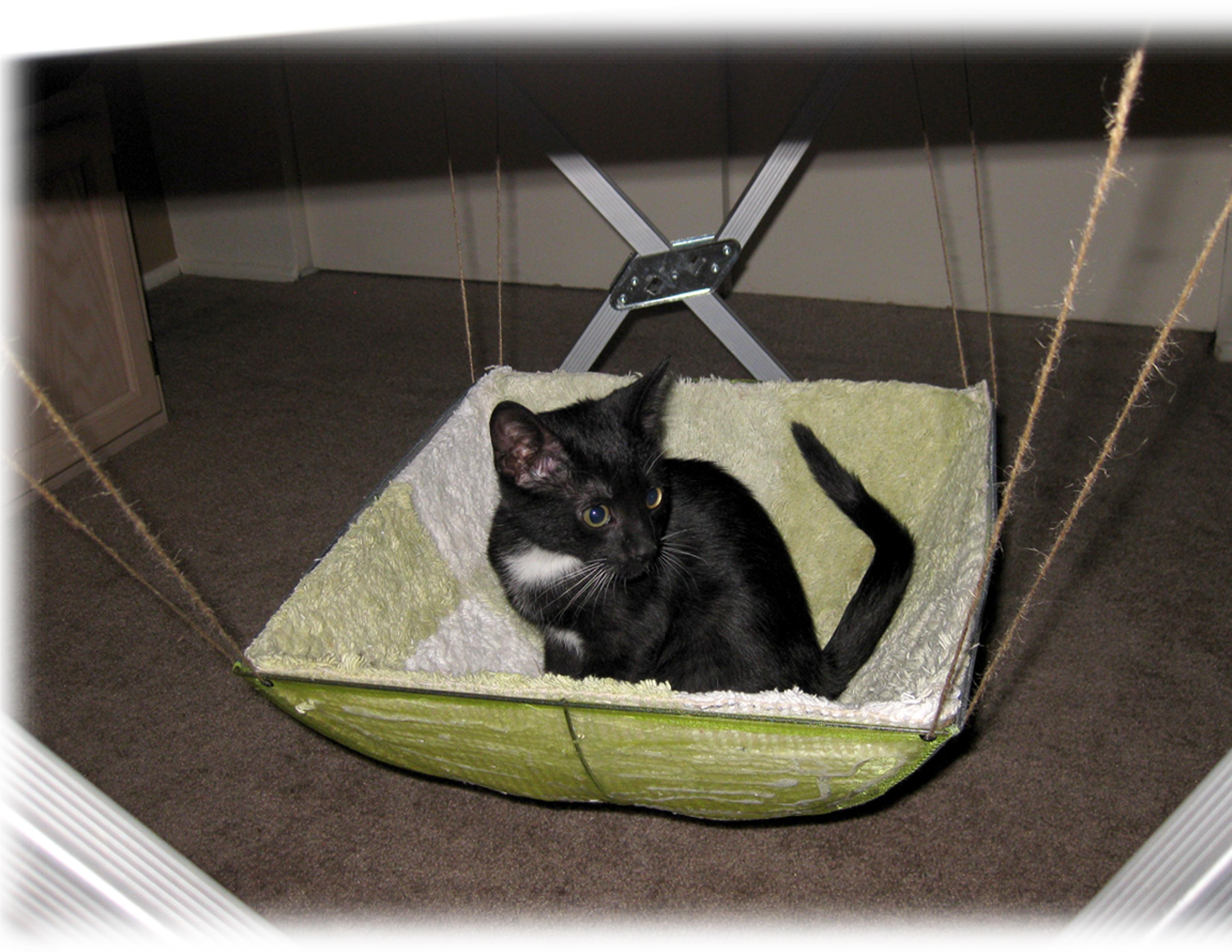 diy cat hammock d i y  cat hammock    rh   southernazvets wordpress